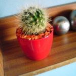 Spomienka na kaktus, starú izbu a Macku
